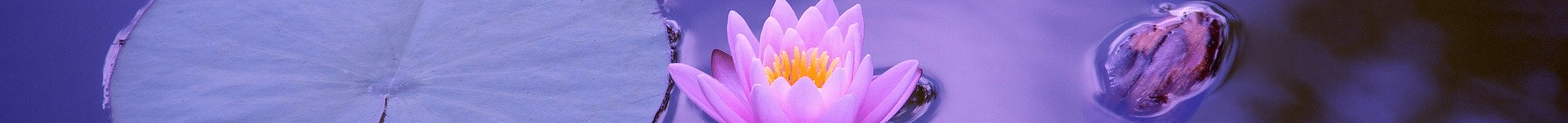 Feuille de lotus